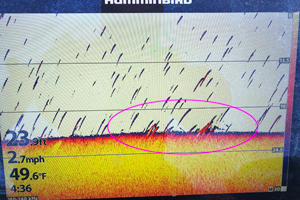 image of humminbird screen showing crappies