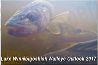 image links to walleye fishing article