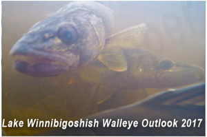 image of walleyes