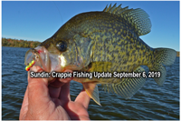 image of nice crappie