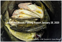 image links to lake of the woods report