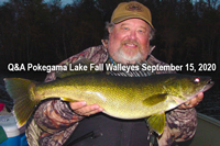 image links to pokegama lake walleye article