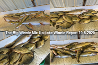 image of mixed creel of fish from lake winnie