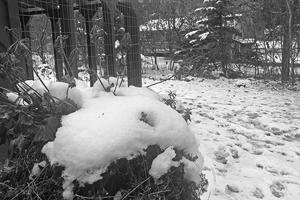 image of snowy yard