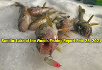 image links to lake of the woods ice fishing report