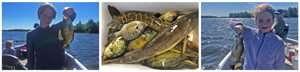 Image links to fishing update about mixed bag trolling presentation