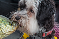 image of Bell kissing big crappie