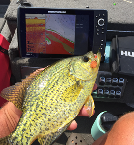 image of crappie caught on Little Joe Spinner