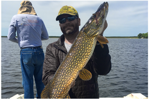 image of big pike caught on kabetogama